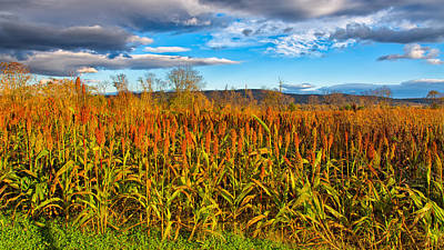 Photograph - The Infamous Cornfield by John M Bailey