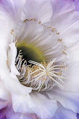 Photograph - The Inner Beauty  by Saija Lehtonen