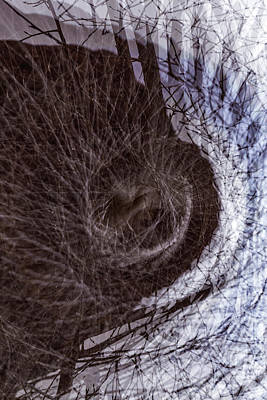 Photograph - The Inner Ear Of Trees by Deborah Hughes