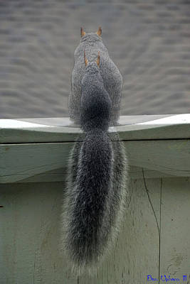 Photograph - The Inner Squirrel by Ben Upham III