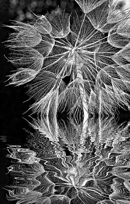 Salsify Wall Art - Photograph - The Inner Weed - Reflection Bw by Steve Harrington