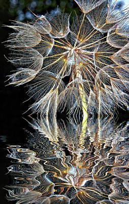 Salsify Wall Art - Photograph - The Inner Weed - Reflection by Steve Harrington