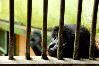 The Innocent Captivity Original by Dwi Ratri Utomo