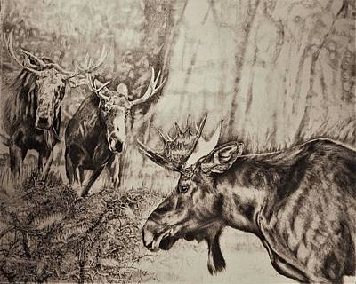 Yellowstone Drawing - The Intro- Moose by Susie Gordon