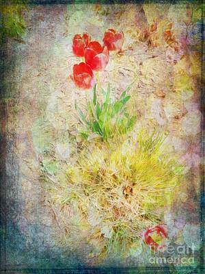 Wall Art - Photograph - The Introverted Tulip by Claire Bull