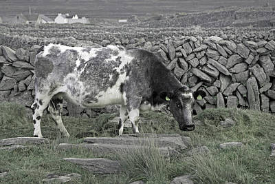 Cow Humorous Photograph - The Ireland Moo by Betsy Knapp