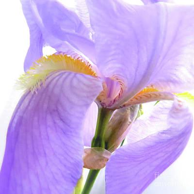 Garden Flowers Photograph - The Iris Blossom by Scott Cameron