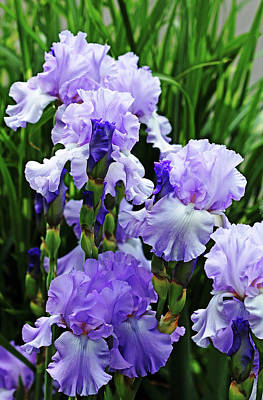 Photograph - The Iris Blues by Debbie Oppermann