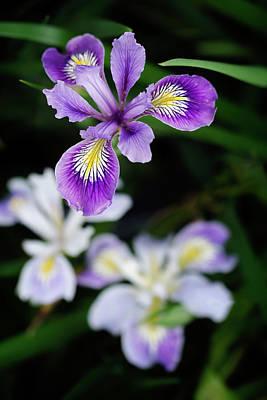 The Iris Garden Art Print