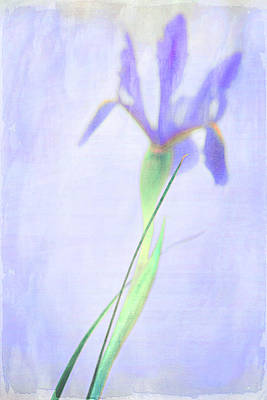 Photograph - The Iris by Theresa Tahara
