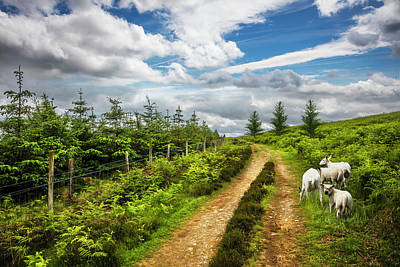 Photograph - The Irish Countryside by Debra and Dave Vanderlaan