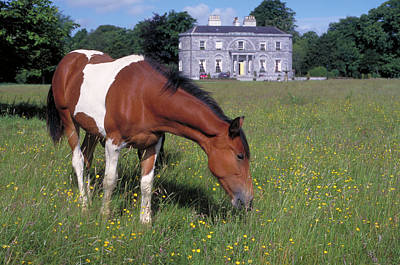 Photograph - The Irish Horse by Carl Purcell
