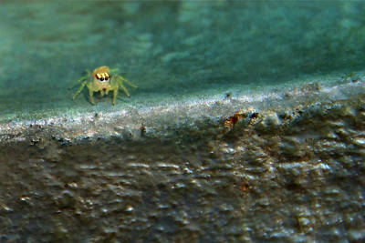 Photograph - The Itsy Bitsy Spider by Bibi Rojas