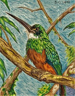 Rain Forest Animals Drawing - The Jacamar by Bryant Lamb