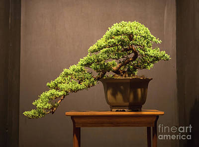 Photograph - The Japanese Art Of Bonsai by Kevin McCarthy