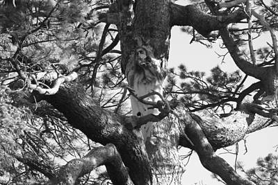 Photograph - The Jesus Tree In Black And White by Diana Chase