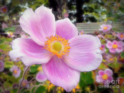 Photograph - The Jewel Of The Garden by Sue Melvin