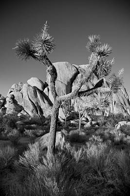 Joshua Tree Np Photograph - The Joshua Tree by Peter Tellone