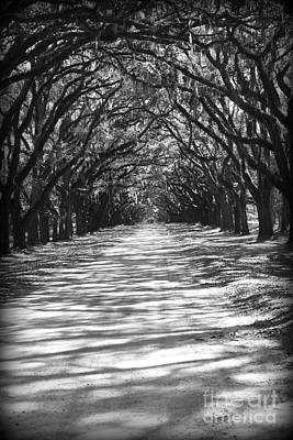 Shadows And Light Photograph - Live Oaks Lane With Shadows - Black And White by Carol Groenen