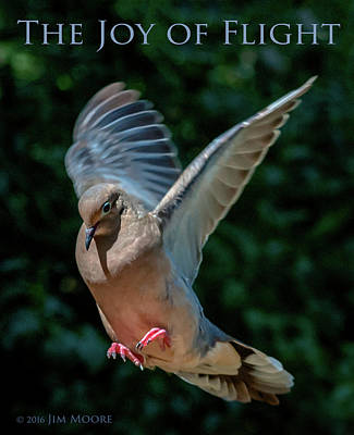 Photograph - The Joy Of Flight Poster by Jim Moore