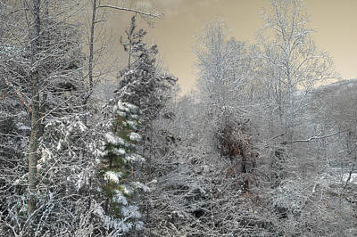 Photograph - The Joy Of Winter by Mike Eingle