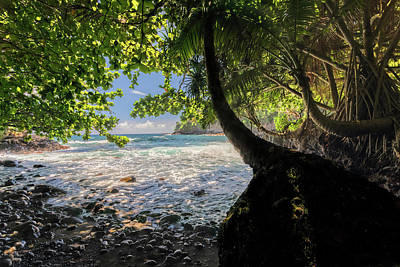 Photograph - The Jungle At Onomea Bay  by Susan Rissi Tregoning