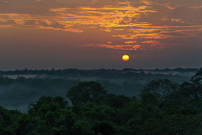 Photograph - The Jungle Wakes by Alex Lapidus