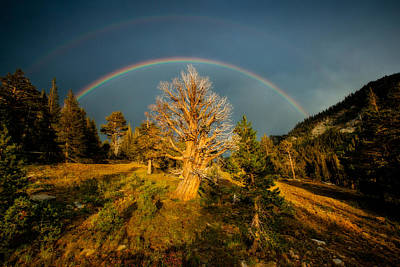 Double Rainbow Photograph - The Juniper's Last Crown by Dan Holmes