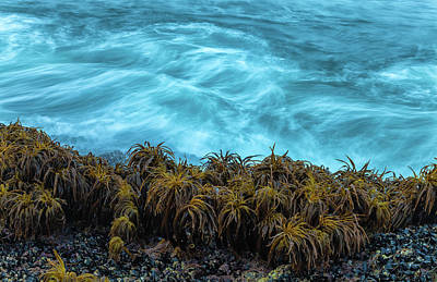 Photograph - The Kelp Jungle by Jonathan Nguyen