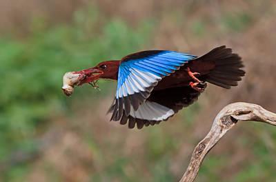 Birding Photograph - The Killer by Amnon Eichelberg