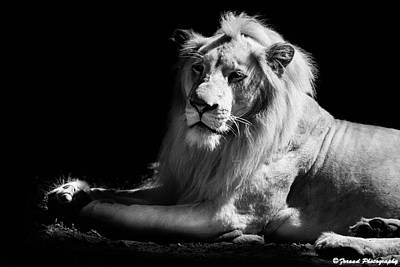 Photograph - The King Black And White by Debra Forand