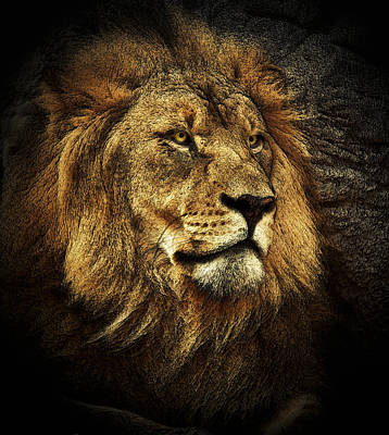Art Print featuring the mixed media The King by Elaine Malott