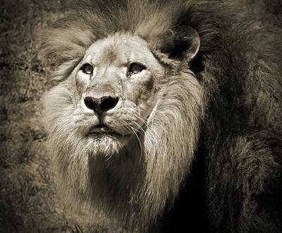 Photograph - The King II by Steven Sparks