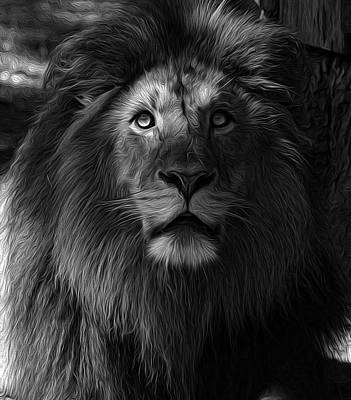 Photograph - The King In B/w by Ronda Ryan