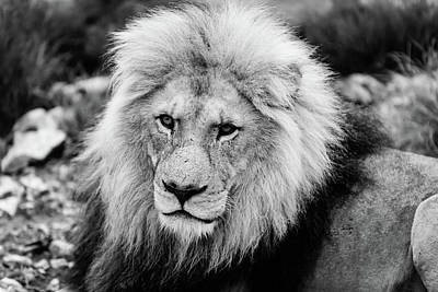 Photograph - The King by Jose Vazquez