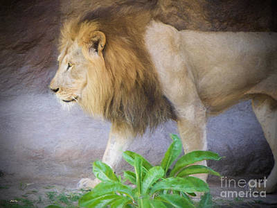 Lion Painting - The King by Judy Kay