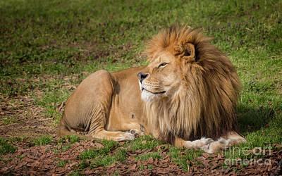Photograph - The King by Karen Jorstad
