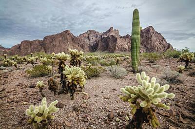 Photograph - The King Of Arizona National Wildlife Refuge by Margaret Pitcher