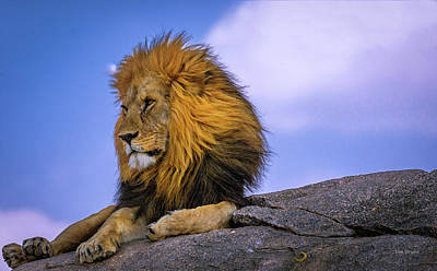 Photograph - The King Of Namiri Plains by Tim Bryan
