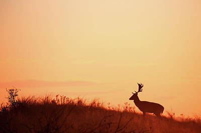 The King Of The Hill Art Print by Roeselien Raimond