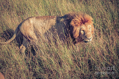 Photograph - The King Of The Jungle by Cami Photo