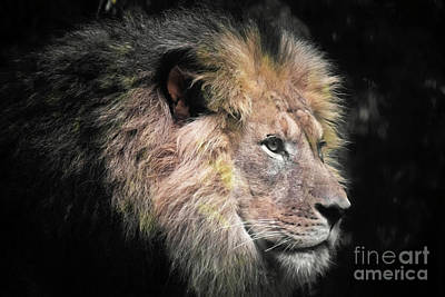 Photograph - The King by Patti Whitten