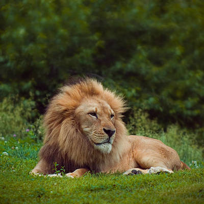 Photograph - The King by Ryan Heffron
