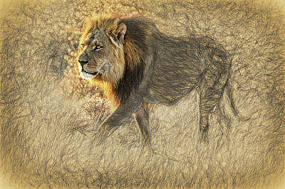 Photograph - The King Stalks by Kay Brewer