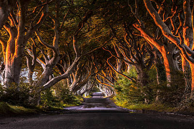 Photograph - The King's Road by Ryan Smith