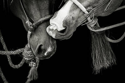 Photograph - The Kiss by Fast Horse Photography