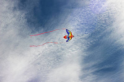 Photograph - The Kite  by Cathy Anderson