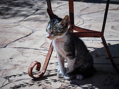 Photograph - The Kitten by Jouko Lehto