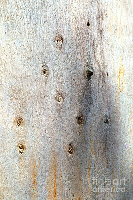 Photograph - The Knots On A Eucalyptus Tree by Joy Watson