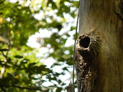 Photograph - The Knotty Wood by Chris Tarpening